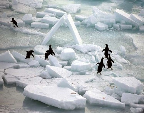 """اكتشاف مثير يغير نظرة العلماء عن """"حرارة"""" القطب الجنوبي"""