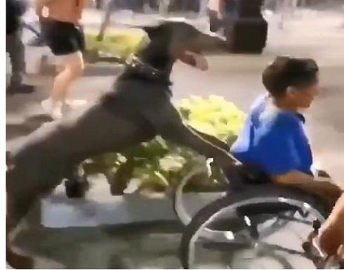 كلب يدفع عربة صاحبه المشارك بمظاهرات امريكا ... شاهد