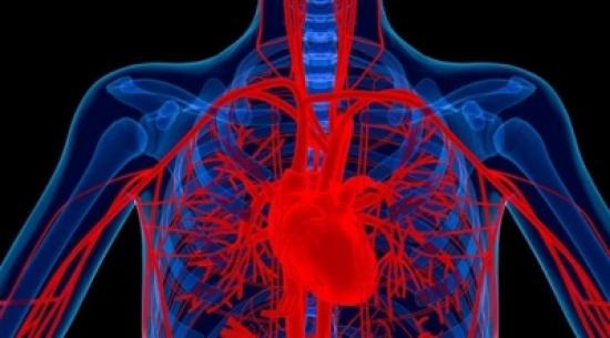 نقص الحديد من أسباب أمراض الشريان التاجي