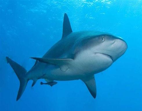 سمكة قرشٍ تمزّق ساق راكب أمواج.. حتّى الموت!