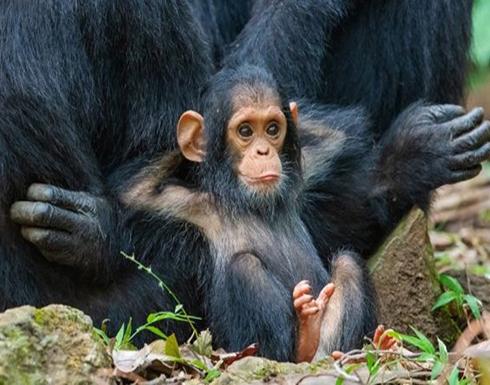 تعرف على الصور الفائزة بمسابقة الحياة البرية الكوميدية (شاهد)