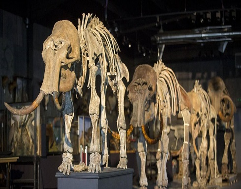 العثور على عظام حيوان عاش قبل أكثر من 140 قرناً!