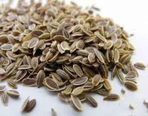 السنوت من أفضل الأعشاب لعلاج تعب المعدة و الهضم و النفخة جي بي سي نيوز