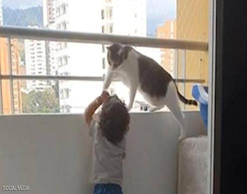 قطة تمنع طفلا من تسلق حاجز الشرفة خوفا من سقوطه في كولومبيا ... فيديو