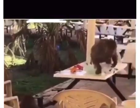 مجموعة من القرود تهاجم طالبات سعوديات (فيديو)