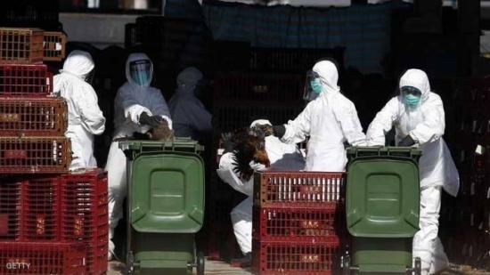 """إسرائيل تكتشف حالة شديدة العدوى لـ""""إنفلونزا الطيور"""""""