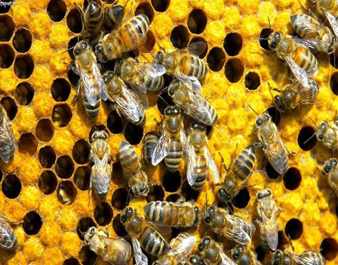 """بالصورة :جنازة رمزية لـ""""النحل"""" احتجاجًا على قتله"""