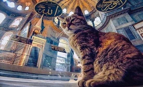 """قطة ايا صوفيا الشهيرة """"غلي"""" تفارق الحياة"""