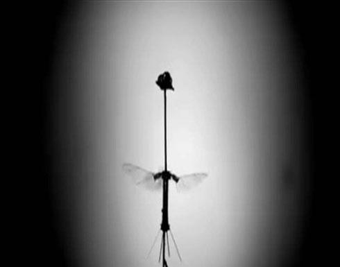 """طفرة علمية.. الروبوت """"الحشرة"""" يطير من دون بطارية"""
