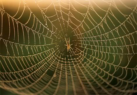 تطوير خيوط عنكبوت بإمكانها إلتقاط طائرة عند سقوطها