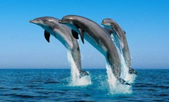 الدلفين في الحلم... هل يحمل دلالات ايجابية؟