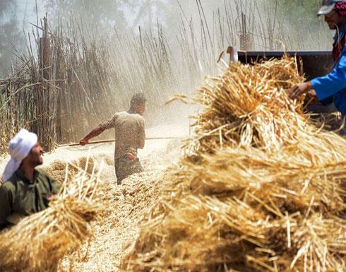 هل تستمر مصر على قائمة أكثر بلدان العالم استيرادا للقمح