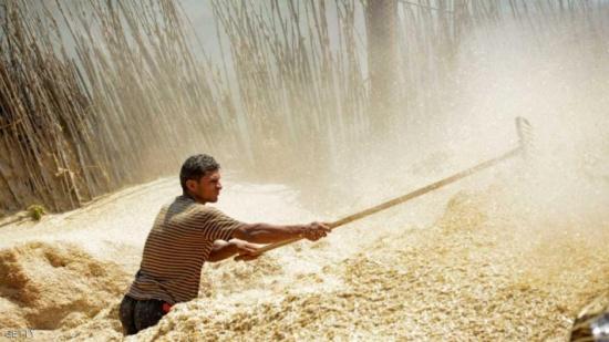 """باليوم.. مصر تكشف مدى """"احتياطي القمح"""""""