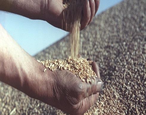 مؤسسة الحبوب السورية تشتري قمحا بسعر 195 دولارا للطن