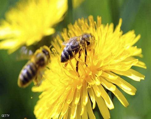 """علماء: النحل """"بارع في الحساب"""""""