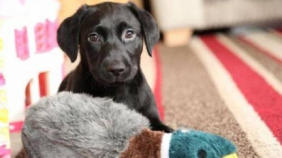مستشفى بريطاني يستخدم الحيوانات الأليفة في علاج الأمراض النفسية