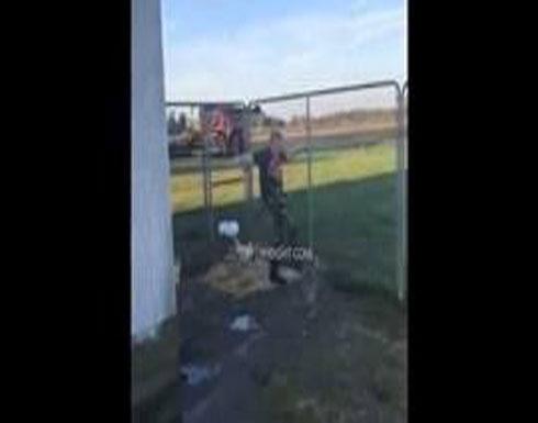 طفل يتصدى لدجاجة هاجمته بالضرب (فيديو)