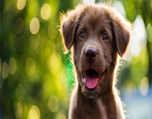 """تحذير: لعاب الكلب قد يسبب ببتر الأطراف.. اليكم قصة """"ماري"""""""