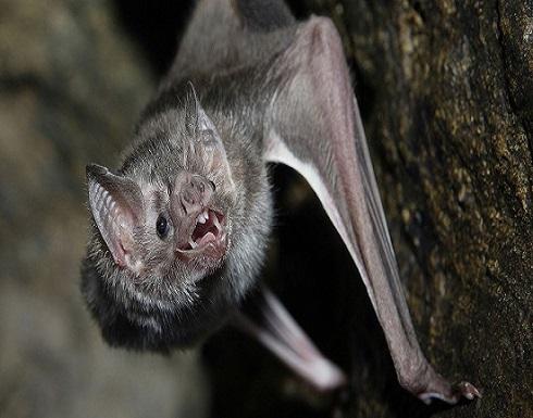 الصين تتخذ قرارًا بشأن الخفافيش وآكل النمل الحرشفي