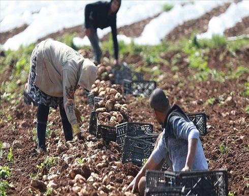 """""""الاحتلال """" يتراجع عن قرار منع تصدير المنتجات الزراعية الفلسطينية"""