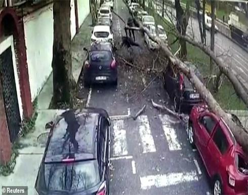 بالفيديو : شجرة عملاقة تقع على ثلاثة أشخاص وتدمر سيارة في تركيا