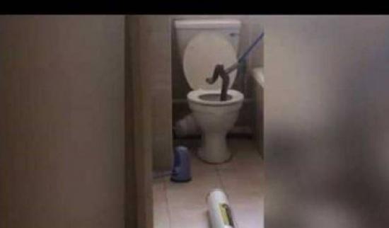 بالفيديو...العثور على ثعبان ضخم داخل مرحاض