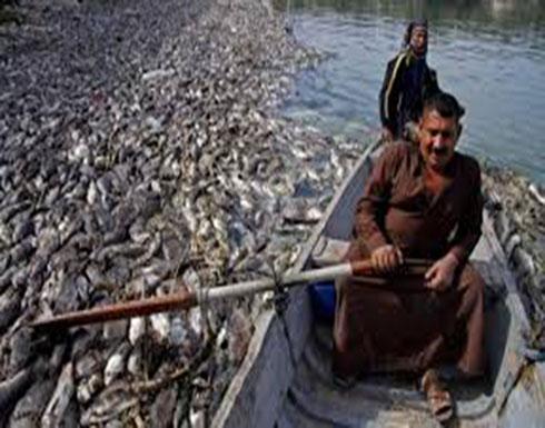 """نفوق الأسماك يضرب من جديد بالعراق.. ويصل """"القادسية"""""""