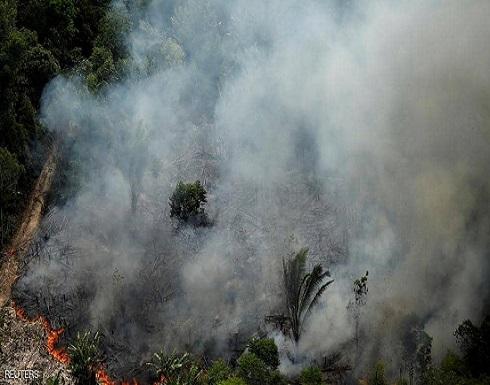 """2.5 مليار شجرة ماتت في """"الأمازون"""".. كارثة تهدد كوكبنا"""