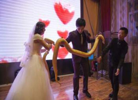 عروسان يتبادلان الافاعي الضخمة يوم زفافهما