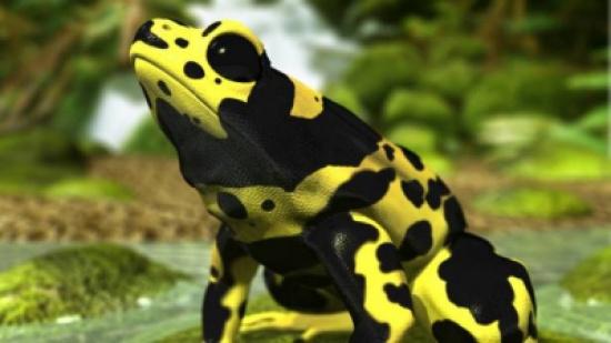 بالفيديو: رغم شكلها الجميل.. لا تقترب من هذه الحيوانات!