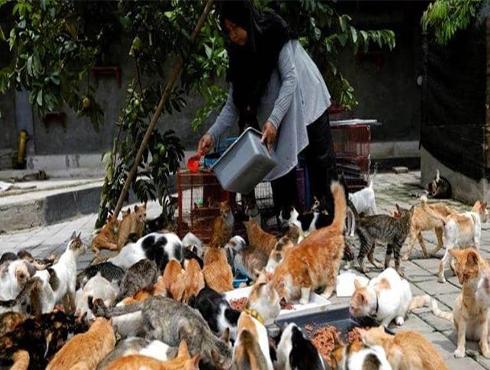 إندونيسية تحول منزلها إلى ملجأ لمئات القطط