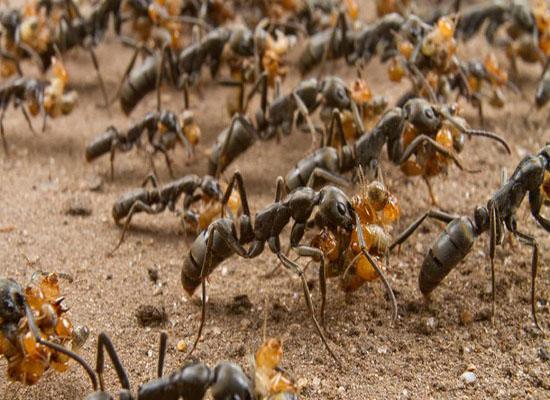 هل تعرف أن للنمل دورات مياه خاصة به؟!