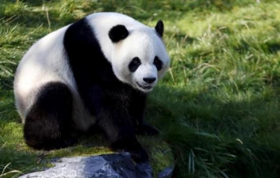 مليار ونصف المليار دولار من أجل «بيت الباندا»!