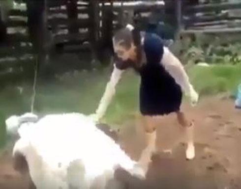 بالفيديو....بقرة تركل امرأة بطريقة مروعة