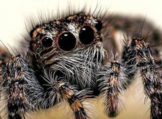 هل تسمع العناكب الأصوات؟.. العلماء يكتشفون أن لها قدرات جديدة (فيديو)