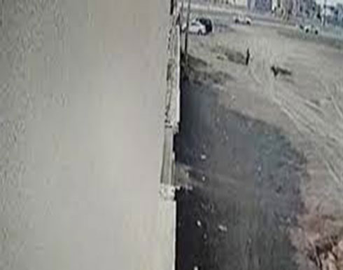 لحظة هجوم كلاب شرسة على طفل بالسعودية (فيديو)