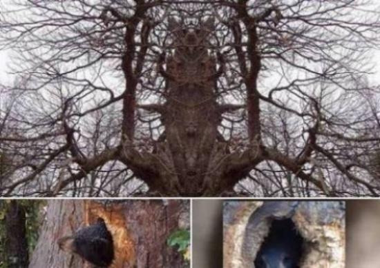 سمعوا صراخ يخرج من شجرة فلما أقتربوا من الصوت وجدوا مفاجأة كارثية!
