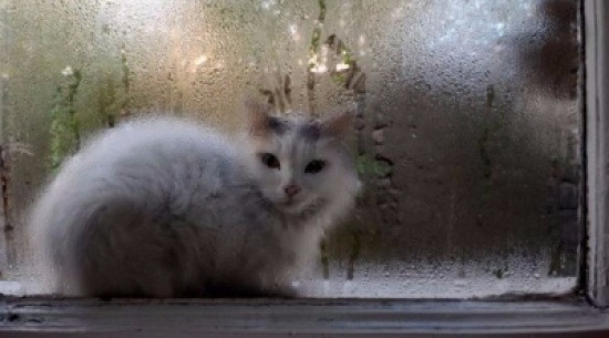 كيف تمنع تشكل البخار على نوافذ المنزل؟