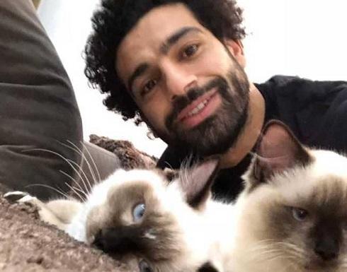 """محمد صلاح يعلق على قضية """"تصدير القطط والكلاب"""""""
