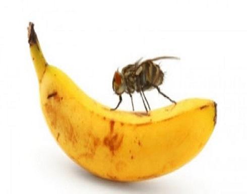 يحمل 60 مرضا.. ماذا يفعل الذباب إذا وقف على طعامك؟
