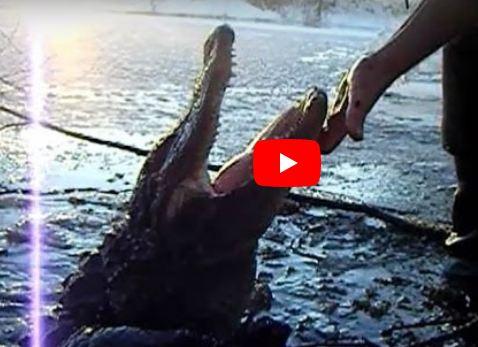 بالفيديو : بعد تجمدها بسبب البرودة .. تماسيح تعود للحياة مجدداً لكشف أغرب أسرار الطبيعة