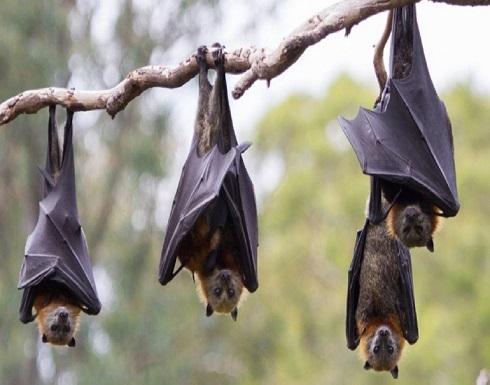 سر تناول شعب الصين للكلاب والحمير والخفافيش