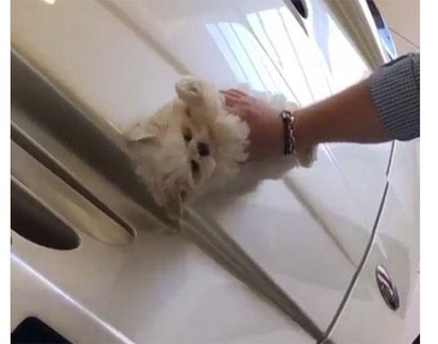 فيديو تسبب بكارثة على الإنترنت.. شاب ينظف سيارته باهظة الثمن بفراء كلبه!