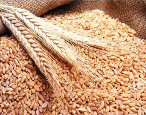 سوريا تطرح مناقصة لشراء 200 ألف طن من القمح