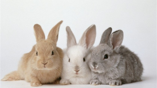 بالفيديو- حكومة تثير الجدل وتدعو مواطنيها الى التكاثر مثل الأرانب!