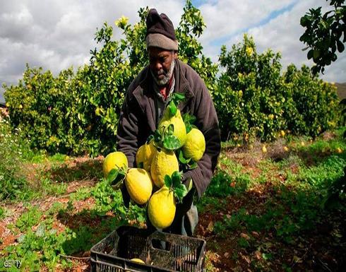 """"""" إسرائيل """" تمنع تصدير المنتجات الزراعية الفلسطينية إلى العالم"""
