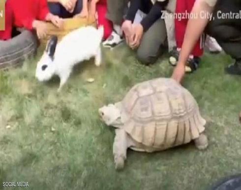 """بالفيديو.. سباق بين سلحفاة وأرنب يؤكد """"القصة الأسطورة"""""""