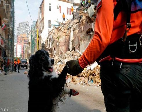 """""""كلب"""" في مهمة بطولية.. استخراج الأمل من تحت ركام بيروت"""