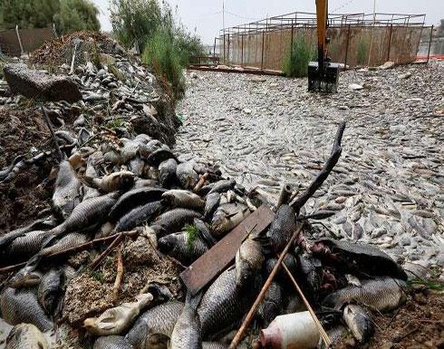 """البرلمان العراقي يناقش قضية """"نفوق الأسماك"""""""