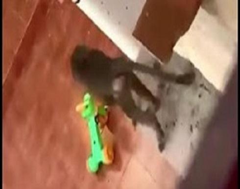 قرد يقتحم منزلا في السعودية.. شاهد رد فعل السكان (فيديو)